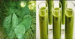 গবেষণা: শরীর জীবাণুমুক্ত করবে পান! জানুন পদ্ধতি