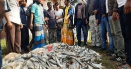 ভেদরগঞ্জে জাটকা ও নছিমনসহ আটক-৩