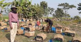 ভেদরগঞ্জে পৌনে এক কোটি টাকার মধু আহরণের সম্ভাবনা