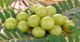 করোনা ভাইরাস মোকাবিলায় আমলকি প্রতিদিন