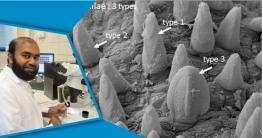 হাতিয়া উপকূলে নতুন প্রজাতি 'গ্লাইসেরা শেখমুজিবি' আবিষ্কার
